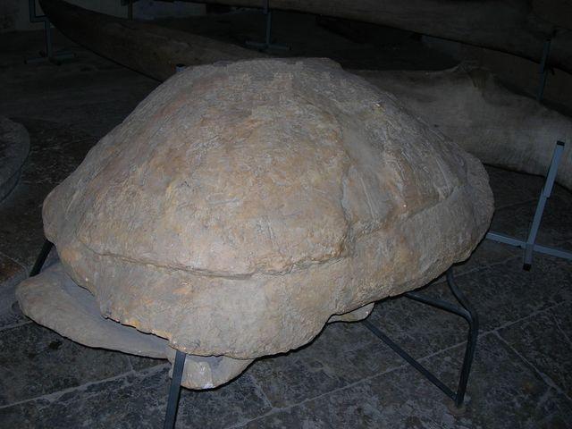 Museum de Perpignan