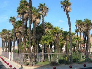 Parc au centre de Baho